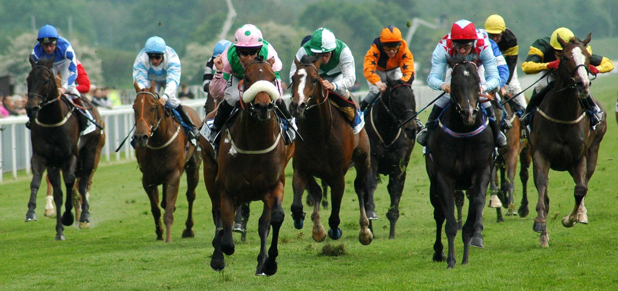 Corrida de Cavalos - Turfe