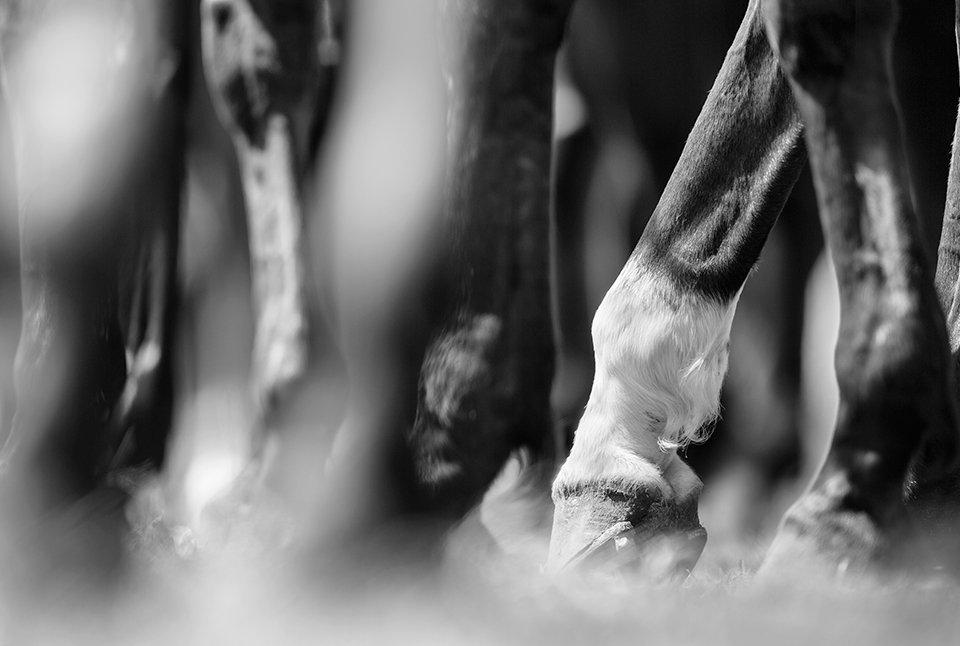problemas ortopedicos dos cavalos