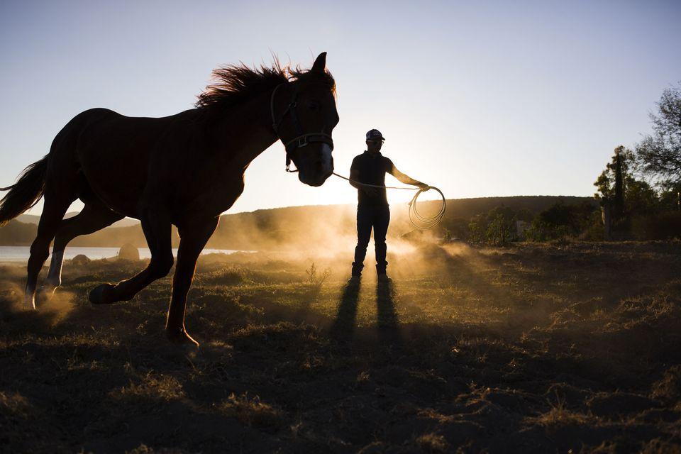 man-training-horse-on-rein-